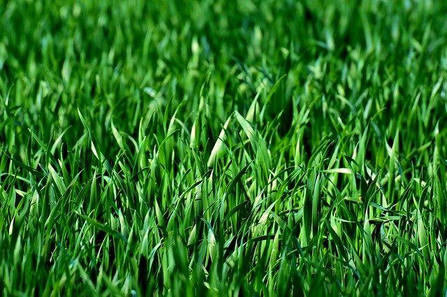 bättre gräsmatta