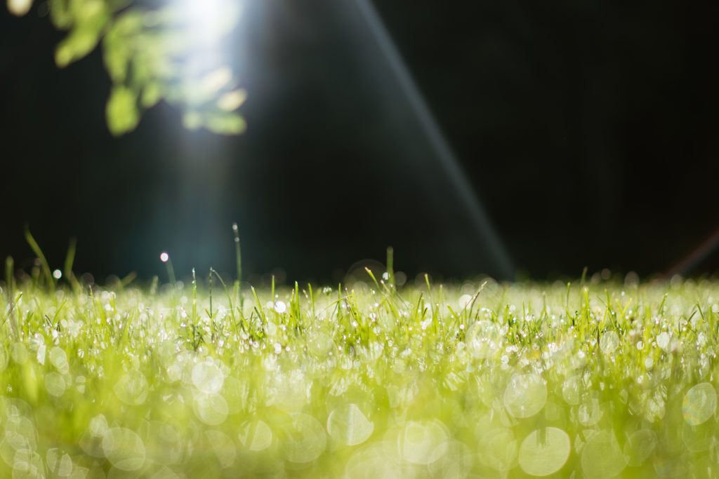 bild på gräsmatta